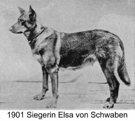 Siegerin - Elsa von Schwaben