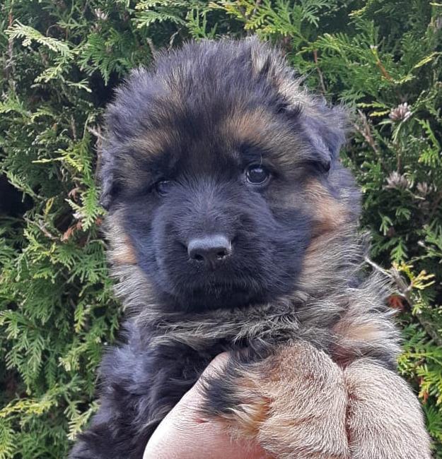 Knut von Adeloga - 5 Wochen
