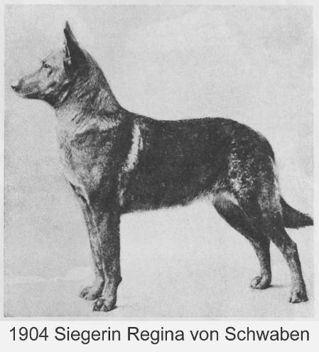 Siegerin - Regina von Schwaben