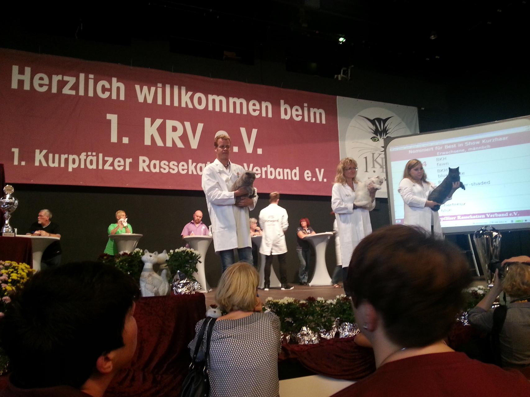 Kronos mit einem Jahr und vier Monaten auf der Ausstellung in Mannheim 2014 nominiert für Best in Show