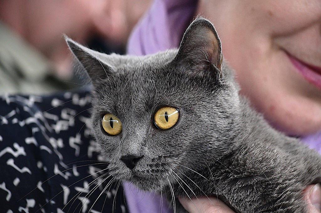 Katzenausstellung 2016