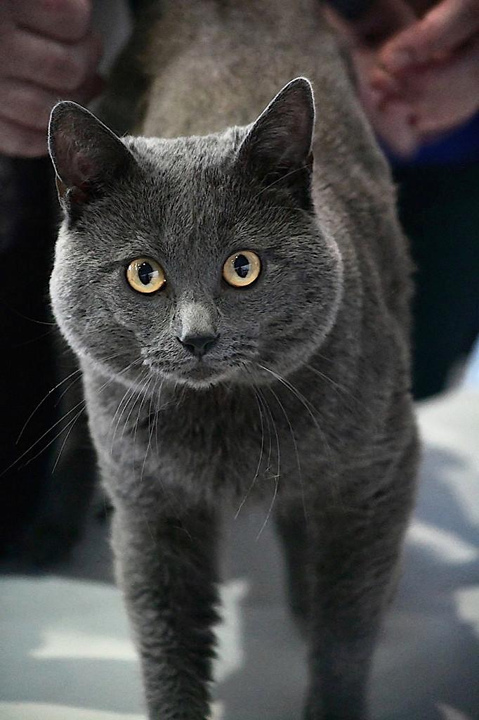 Katzenausstellung 2017