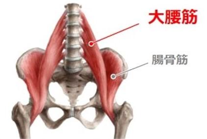 大腰筋は、上半身・骨盤・下半身を連結している重要な筋肉です