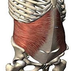 腰痛とコルセット筋