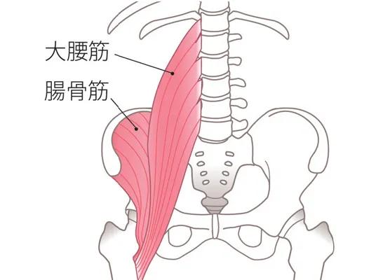 大腰筋は腰椎から腸骨筋は腸骨内側縁から始まり共にモモの骨の内側上部に着いています