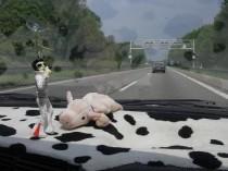 das Schweinchen mit Freund Elvis