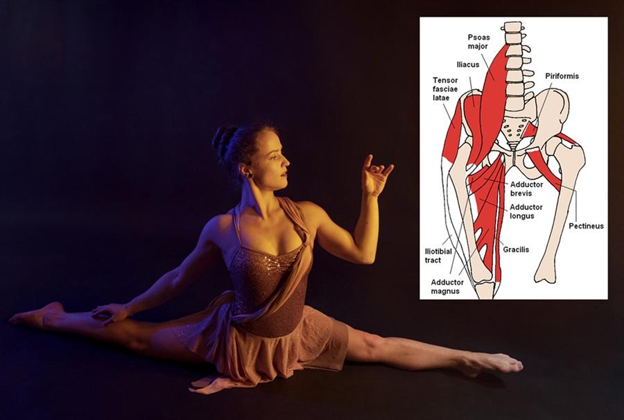 Anatomie-Basics für den Spagat und die Brücke