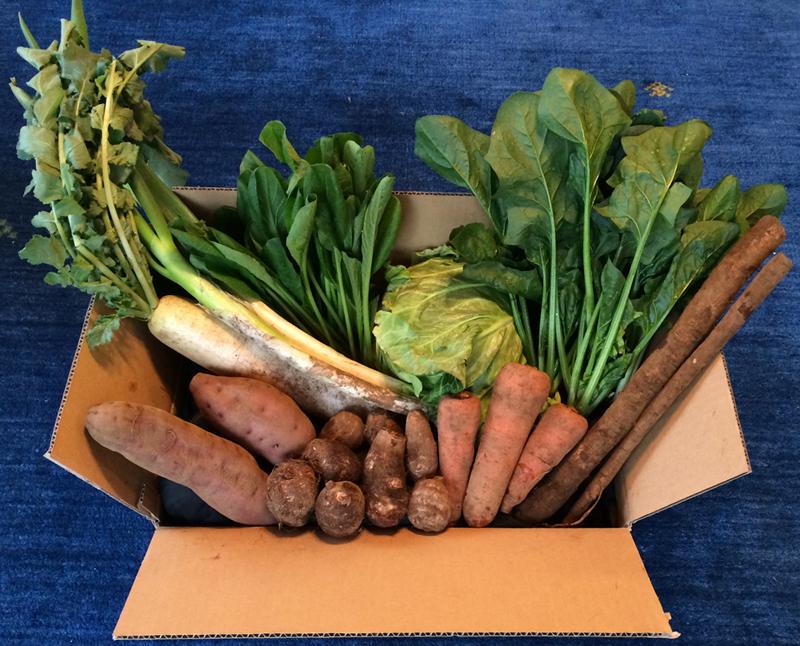おかげさま農場の「旬の野菜おまかせセット」の例:大根、長ネギ、ゴボウ、ほうれん草、春キャベツ、小松菜、里芋、サツマイモ、人参
