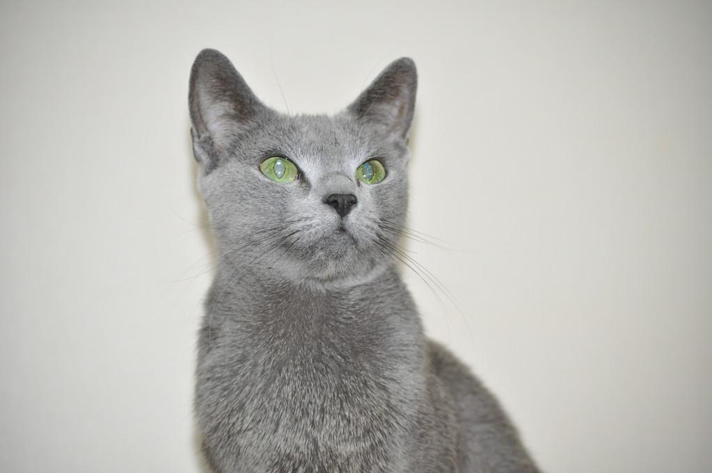 ママ猫のロアちゃんです