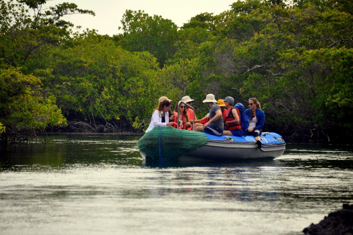 Zodiacausflug in die Mangrovenwälder