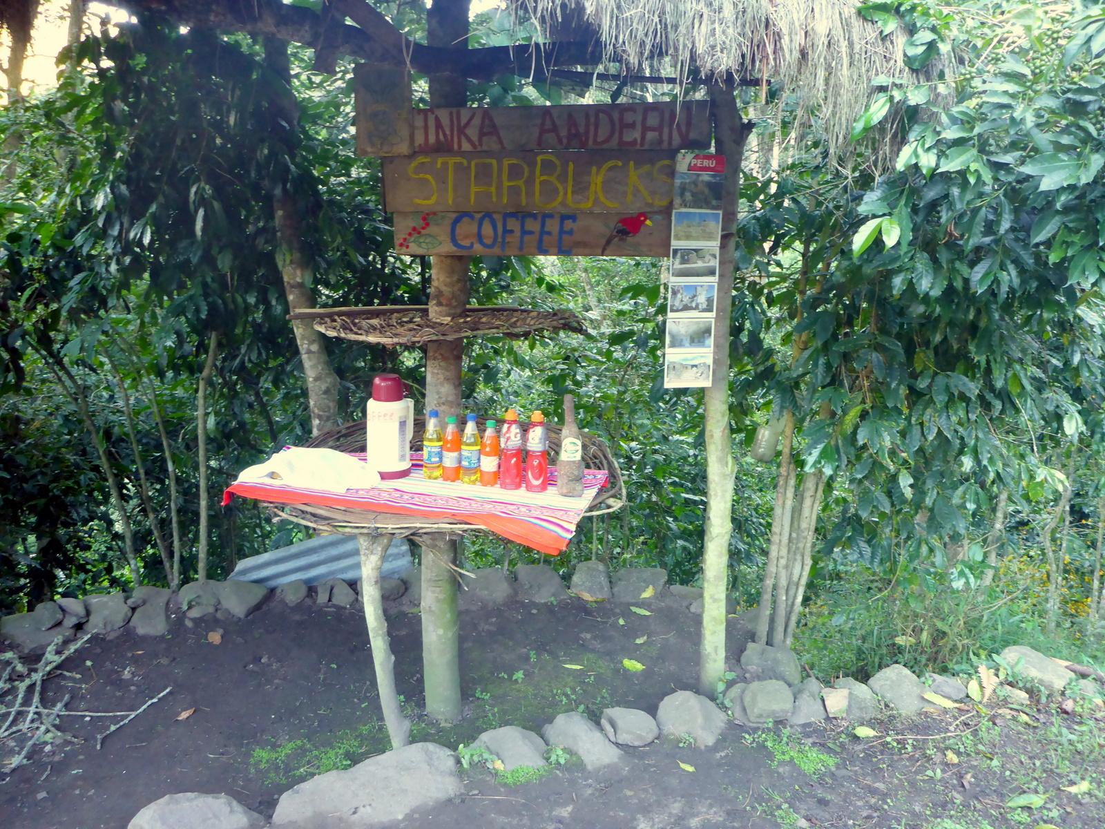 Starbucks im Dschungel
