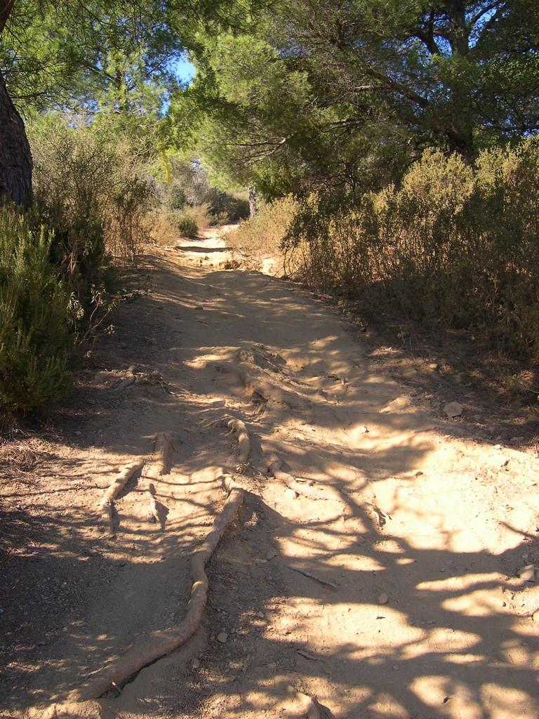 Un chemin, des racines, de la poussière