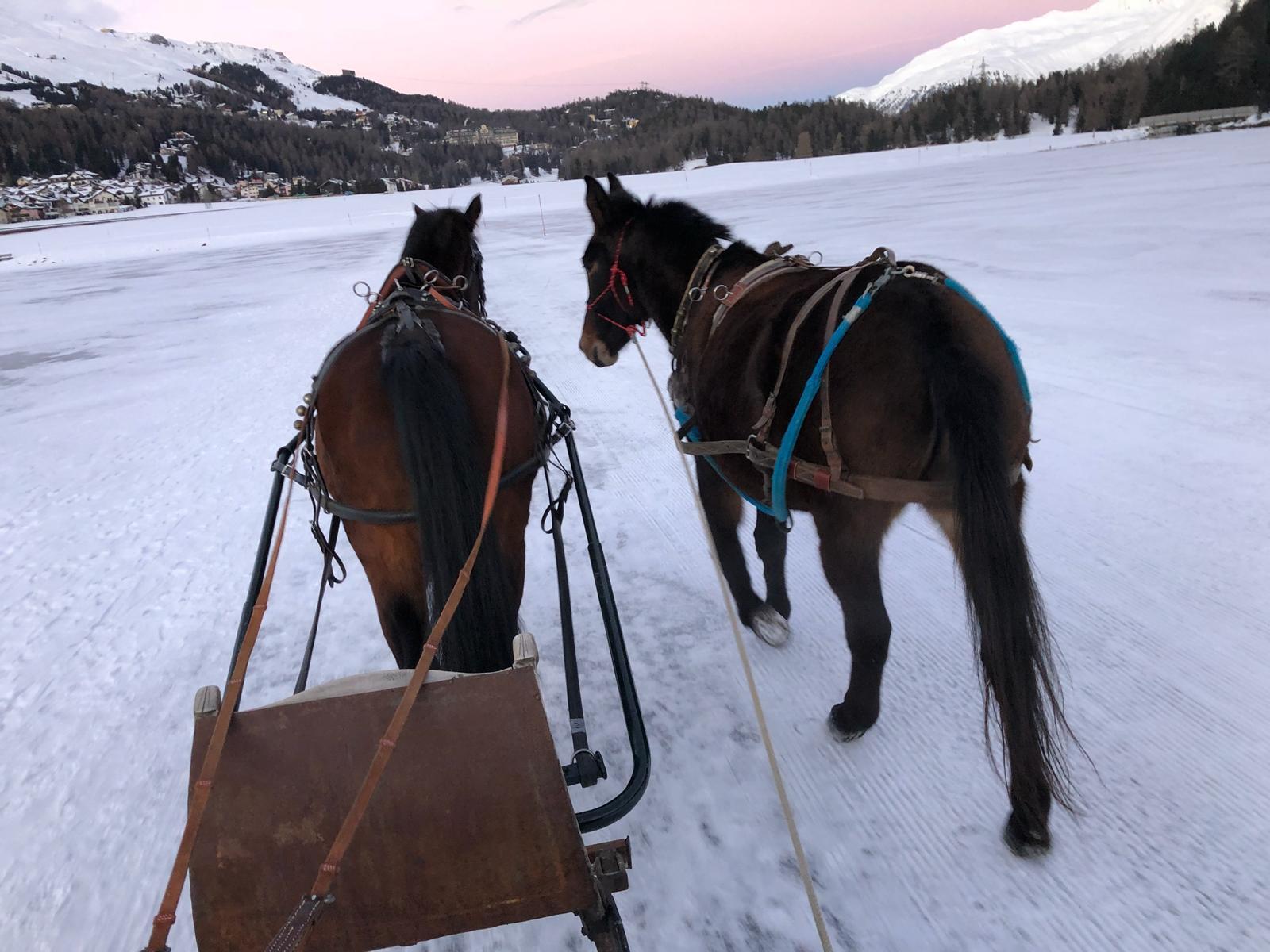 Pferdeschlitten fahren über den gefrorenen See