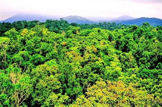 Une forêt tropicale