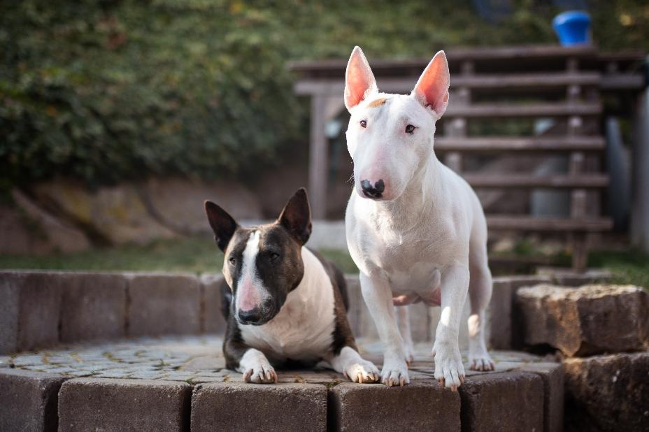 Ywa und Violetta