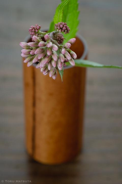 藤袴の花、煤竹茶巾筒を背景に(竹工芸家 初田徹 作)