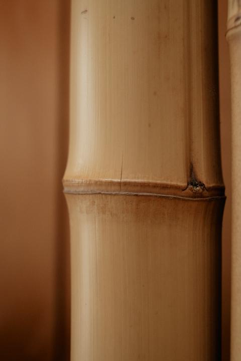 竹の節目に細いヒビが見えます(Fujifilm X-Pro2)
