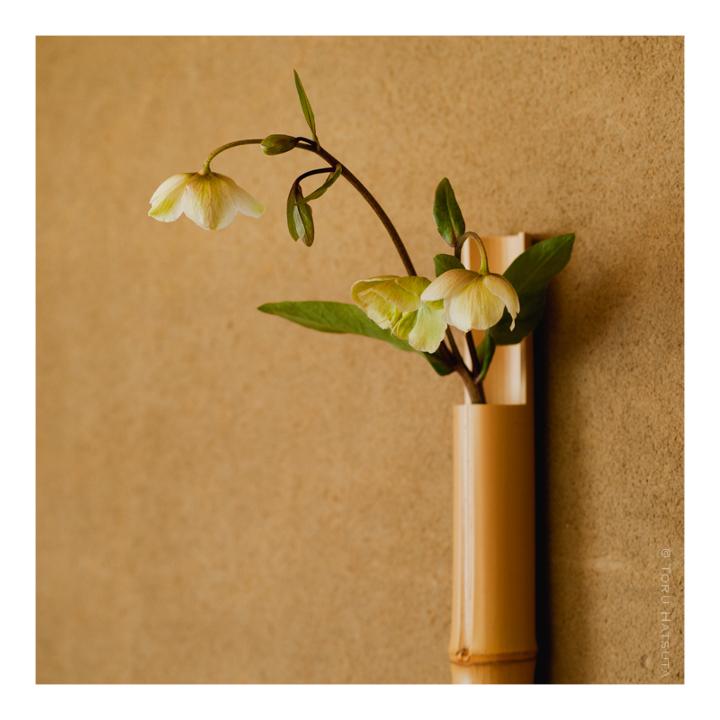 京都 宇治の「花 小森」で竹の花入の取扱いがはじまります