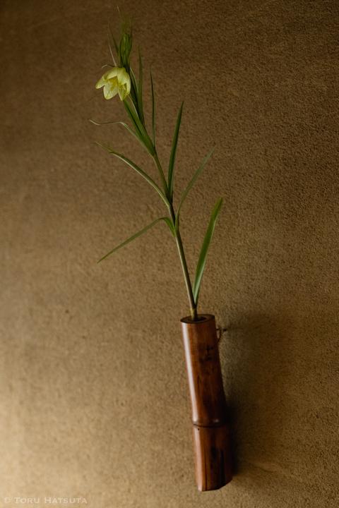 煤竹の掛花入に貝母(アミガサユリ)