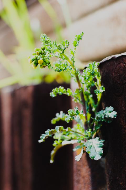壁の花。鋼鉄編