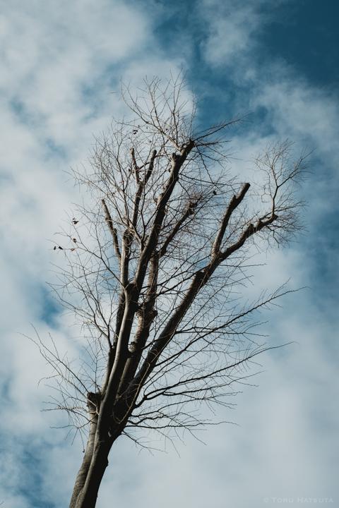 枝に残った枯葉を振り落とすような、新芽のきざし