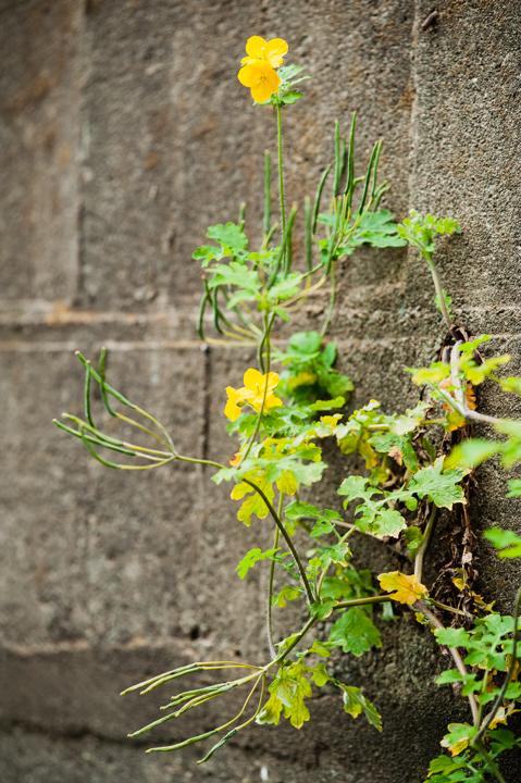 壁の花。コンクリート編