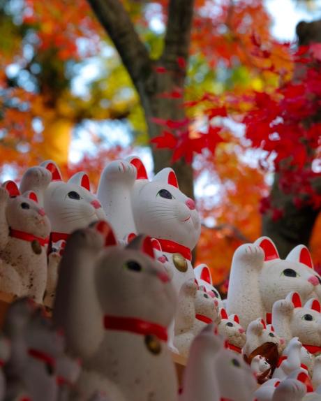 豪徳寺の紅葉を背景にした招き猫たち