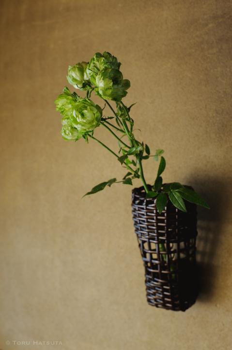 栽培されたグリーンの薔薇を籠に入れます