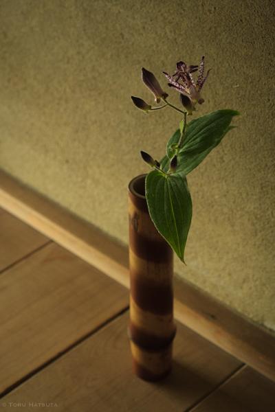 煤竹の一輪挿しに杜鵑草の花|Fujifilm X-T20
