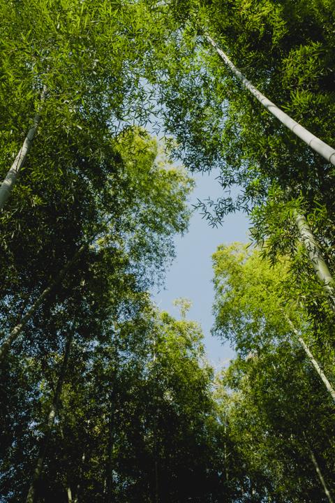 竹の葉の向こうに青空が見えます