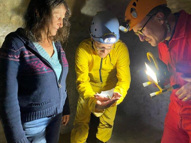 Congrès SFES 2021 - Triton marbré découvert dans un souterrain aménagé - Photo L. Stevens (c)
