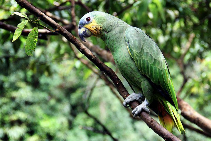 Der grüne Vogel