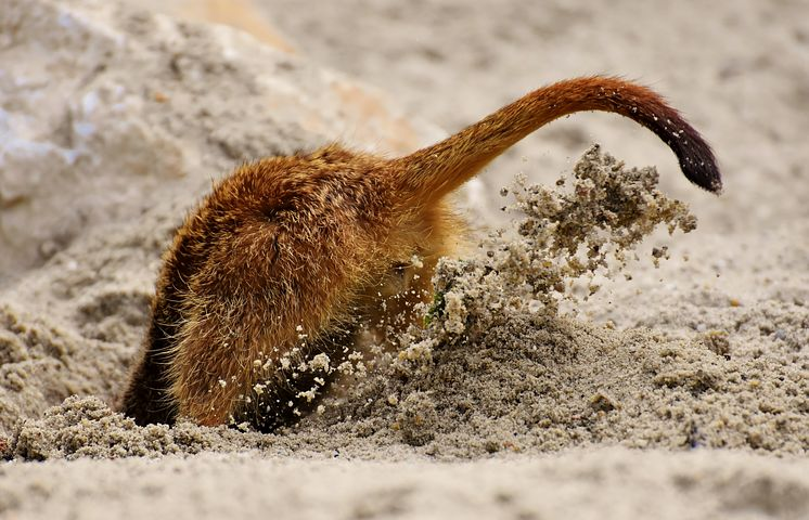 Der Vogel-Strauss-Effekt: Stecken Sie den Kopf nicht in den Sand!
