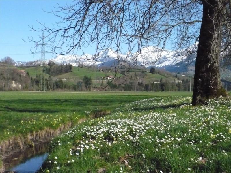 Frühling 2011