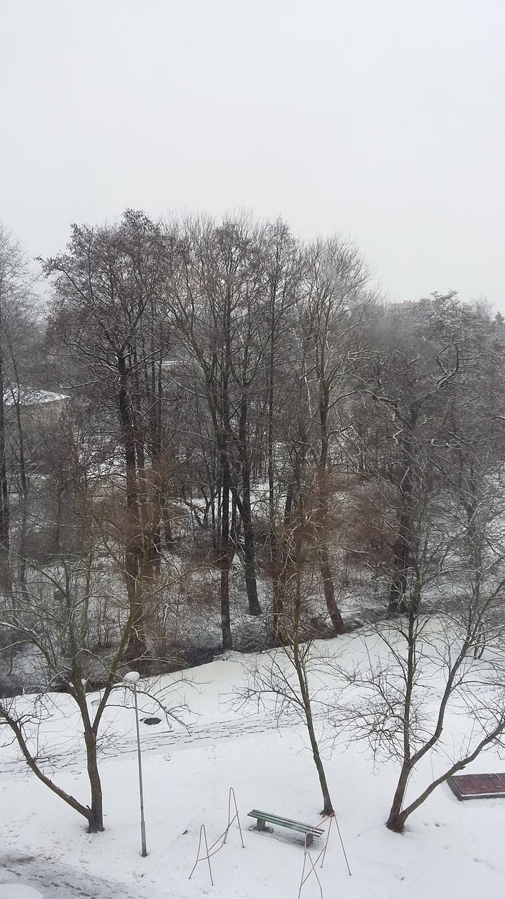 С. Данилина «Снег, который идёт и тает...»