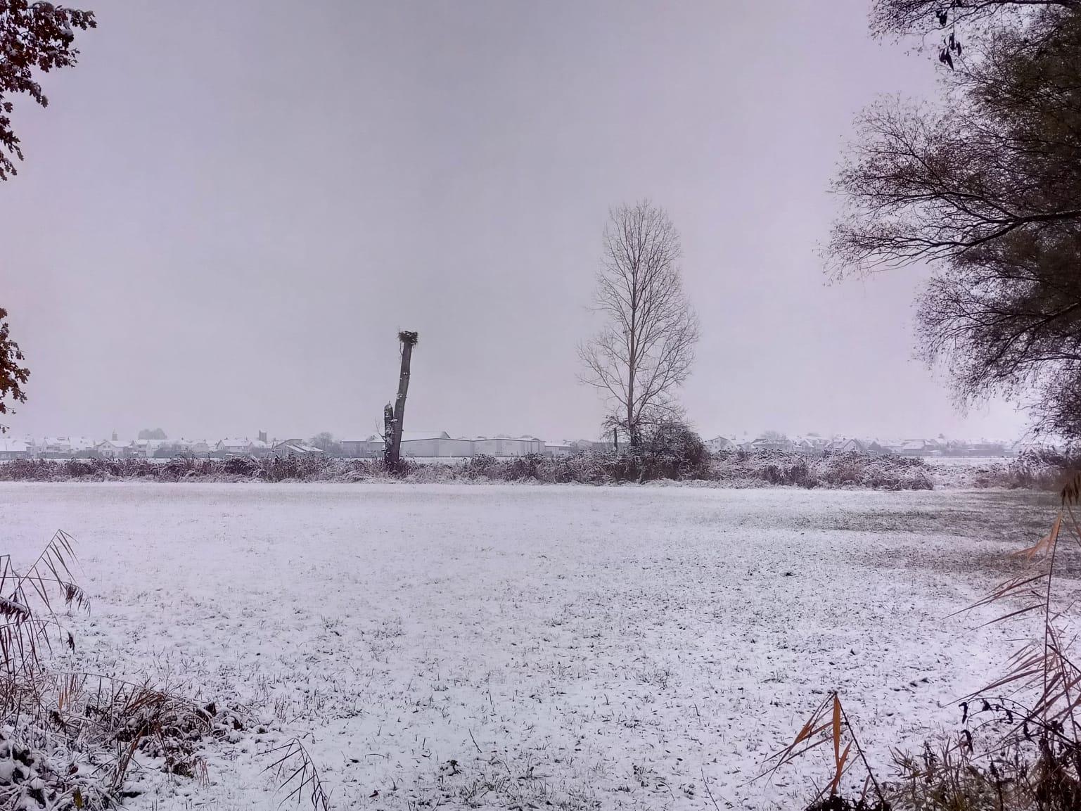 Störche, die man aktuell bei uns sieht, kommen meist aus Nordhessen zum Überwintern