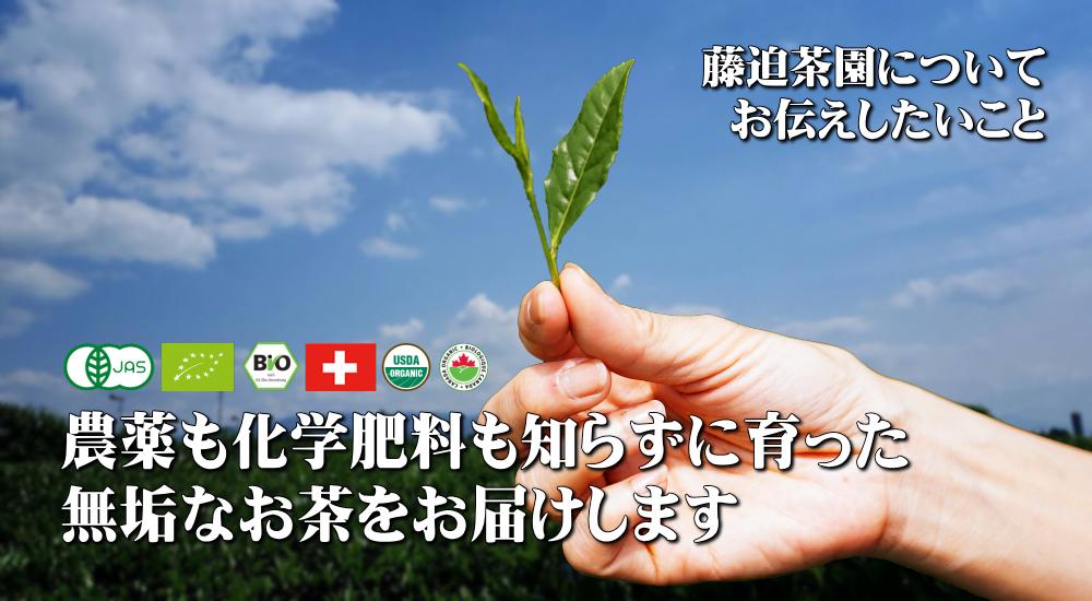 農薬も化学肥料も知らずに育った 無垢なお茶をお届けします