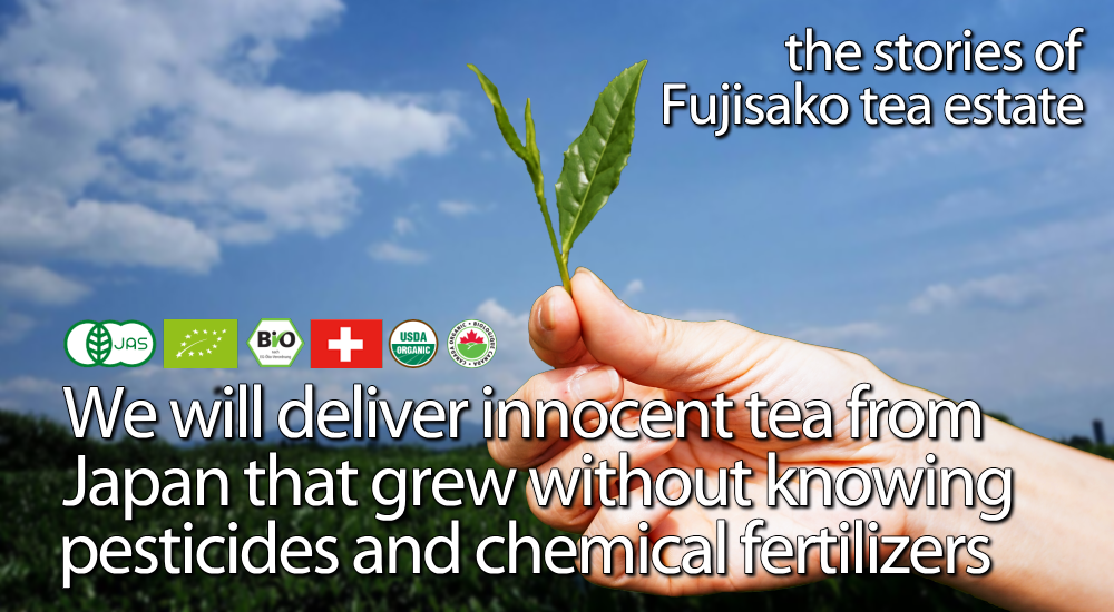 the stories of Fujisako tea estate