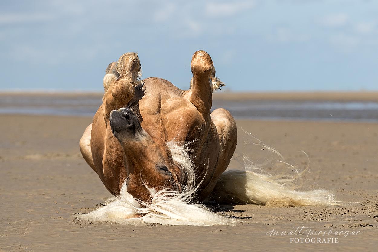 Pferdefotografie am Strand lernen mit Fotografie Annett Mirsberger