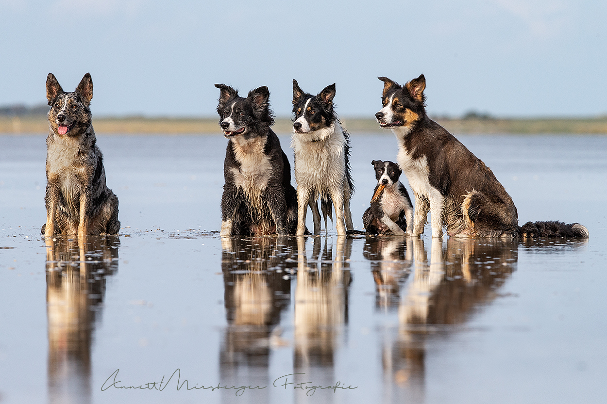 Tierfotografie Workshop in St. Peter-Ording mit tierpfoto