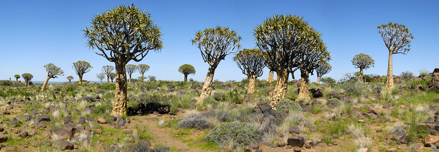 Keetmanshoop, Quiver Tree Forest (Kokerboom Forest)
