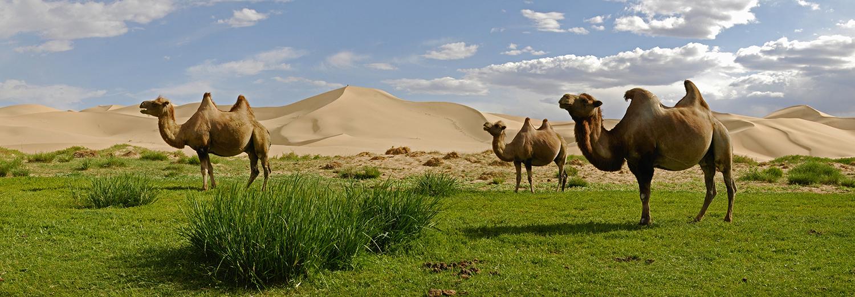 Les dunes de Konghoryn Els