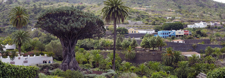 Tenerife, Icod de los Vinos