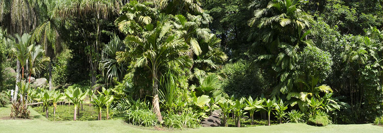 Mahé, Victoria (jardin botanique)