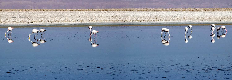 Lac d'Atacama