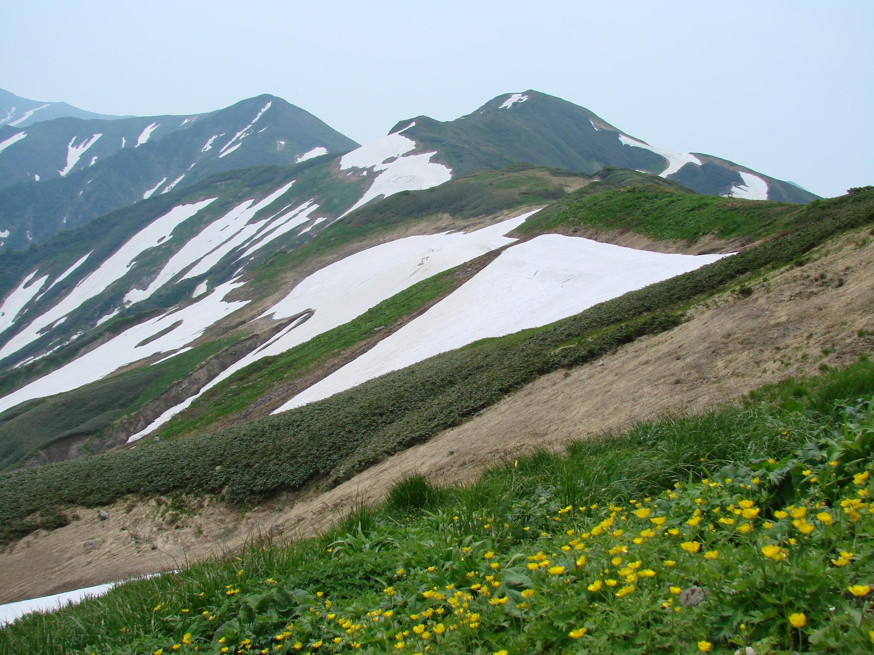 雪田とミヤマキンバイ