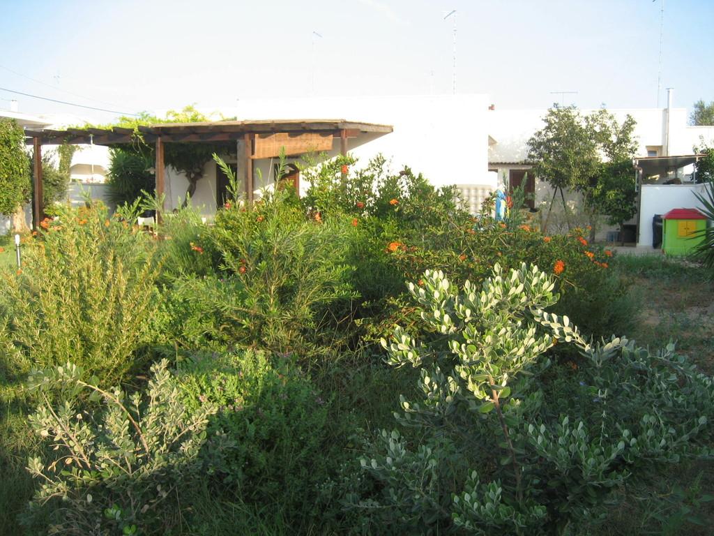 Villa - Giardino essenze
