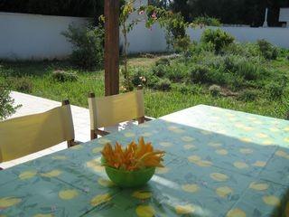 Villa - Fiori di zucchine dell'orto