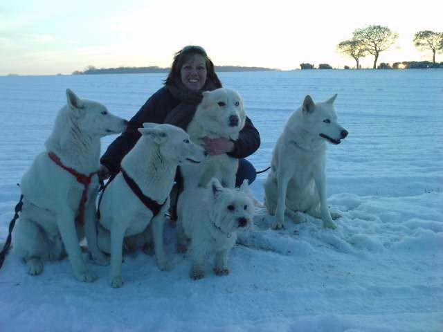 Premières neiges pour les 2 jeunes huskys