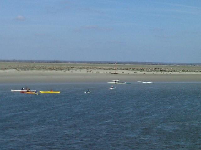 Moutons et kayaks